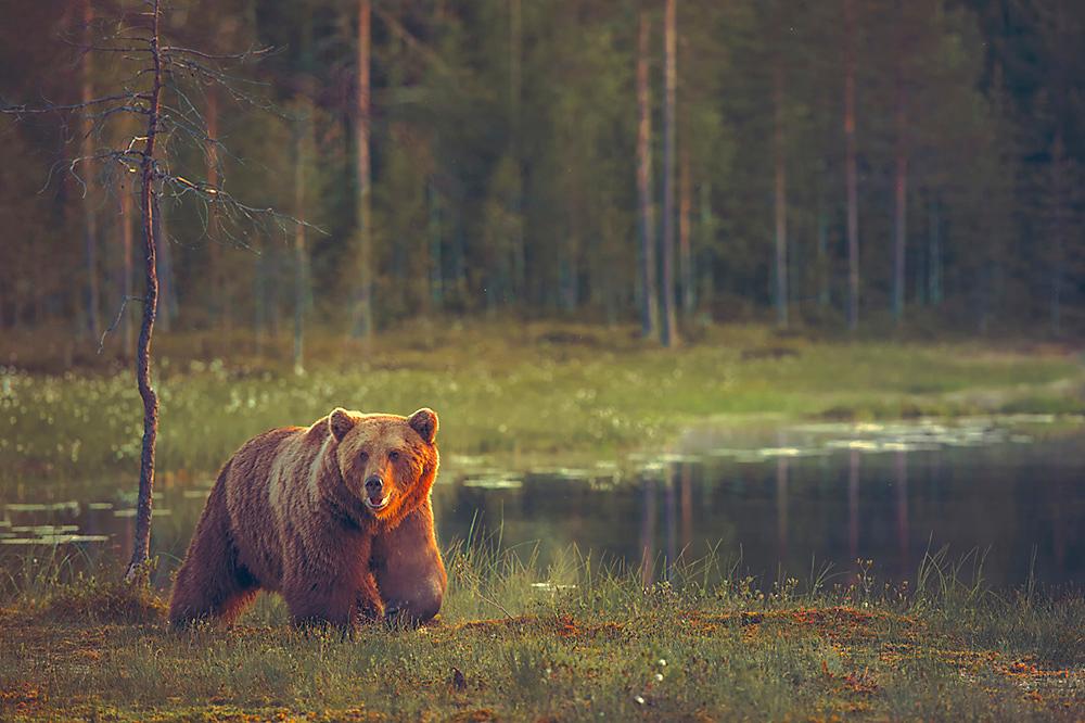 Electric Bear Fence Electric Fence For Bears Zareba