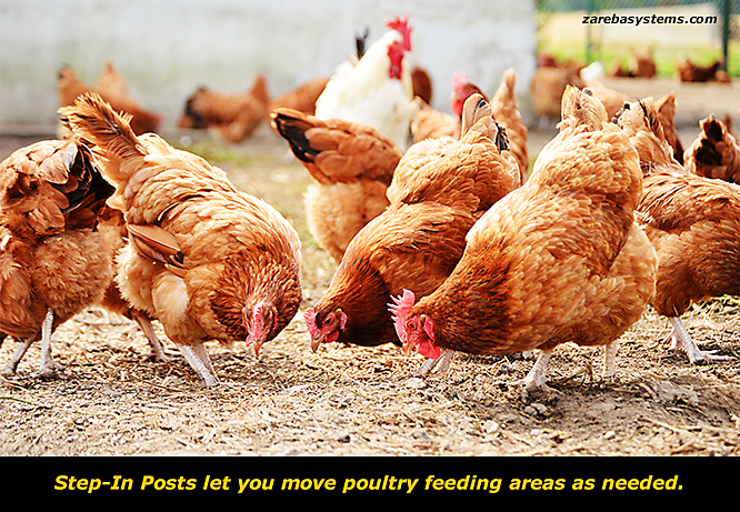 Electric Fencing For Free Range Poultry