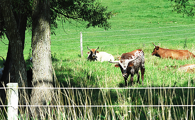 Ready to build the perfect electric fence? You'll need to prep your pasture a bit before starting