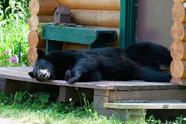 bear on cabin porch