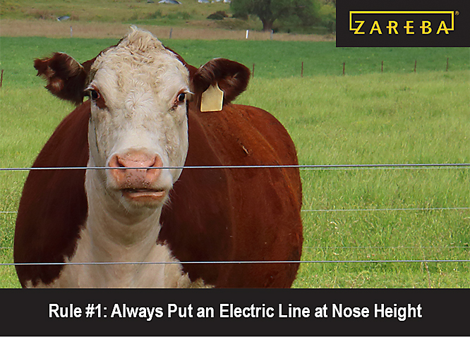 How Many Strands? 7 Rules for Electric Fencing
