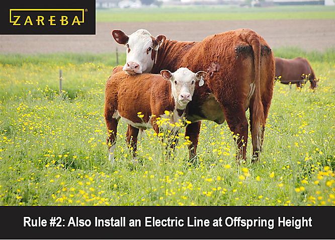 Electric Fence Guidelines