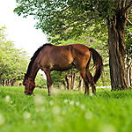 horse pastures and rotational grazing