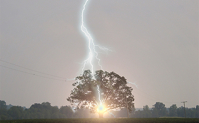 Trees are frequently struck by lightning and are extremely dangerous for people and animals to stand under during a storm.
